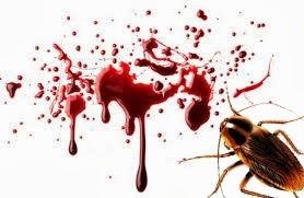 Κατσαρίδες, Τσιρίδες και ΑΙΜΑ