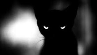 Εισβολή «Δημοκρατίας» στο σκοτάδι